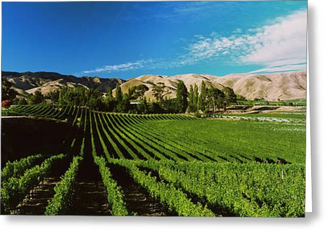 Vineyard, Marlborough Region, South Greeting Card