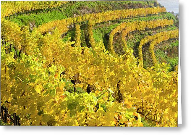 Vineyards Near Village Spitz Greeting Card
