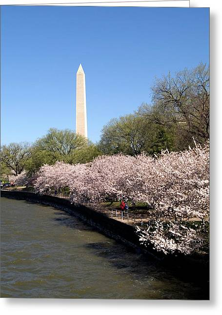 Washington, Dc, Cherry Blossom Festival Greeting Card