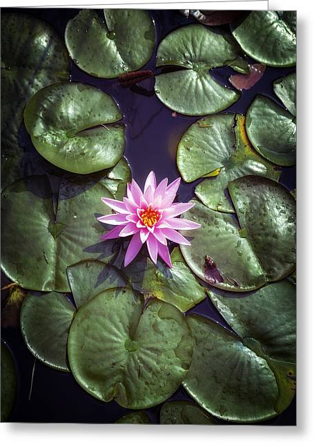Water Lily Greeting Card by Joana Kruse