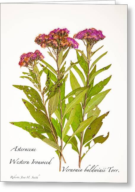 Western Ironweed Greeting Card