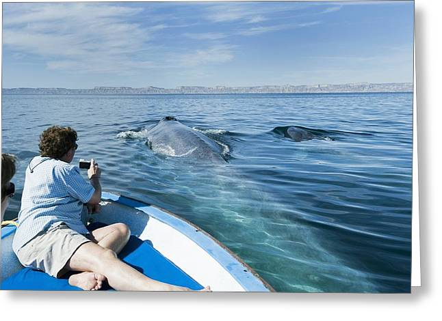Whale Watching, Mexico Greeting Card