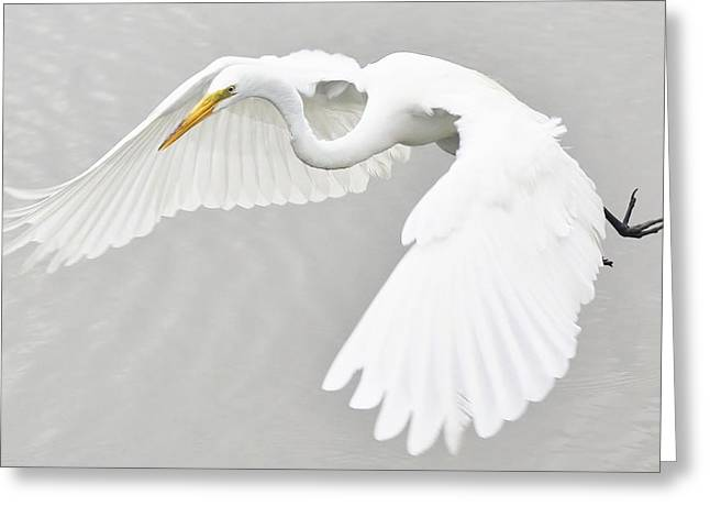 What A Beauty Greeting Card by Paulette Thomas