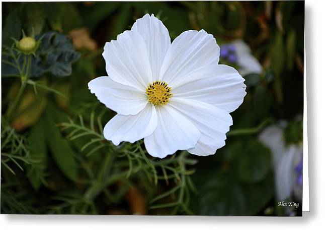 White Flower Greeting Card by Alex King
