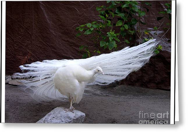 White Peacock Greeting Card by Mariarosa Rockefeller