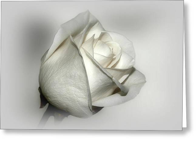 White Rose Greeting Card by Sandy Keeton
