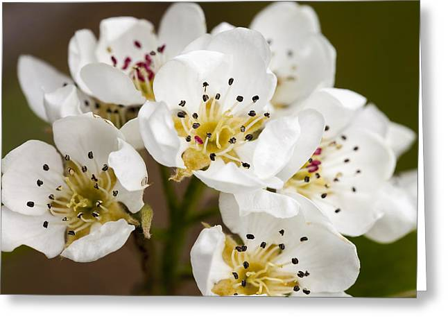 Beautiful White Spring Blossom Greeting Card