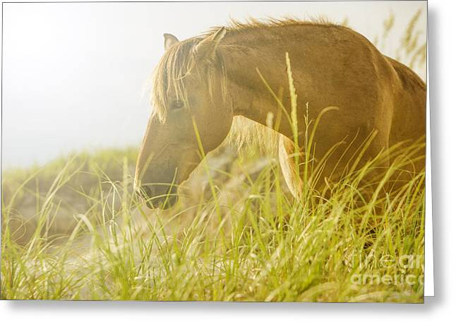 Wild Horse On The Outer Banks Greeting Card by Diane Diederich