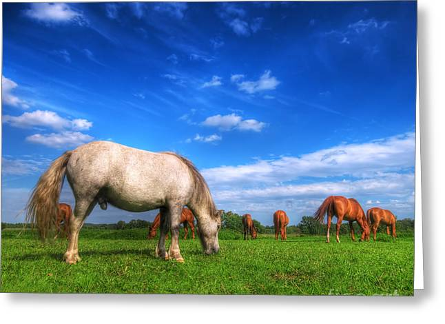 Wild Horses On The Field Greeting Card by Michal Bednarek