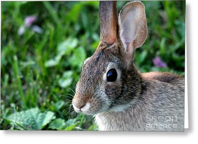 Wild Rabbit Greeting Card by J McCombie