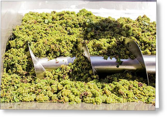Wine Industry Greeting Card by Photostock-israel