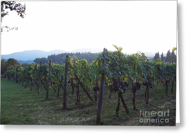 Wine Yards In Loppiano Greeting Card