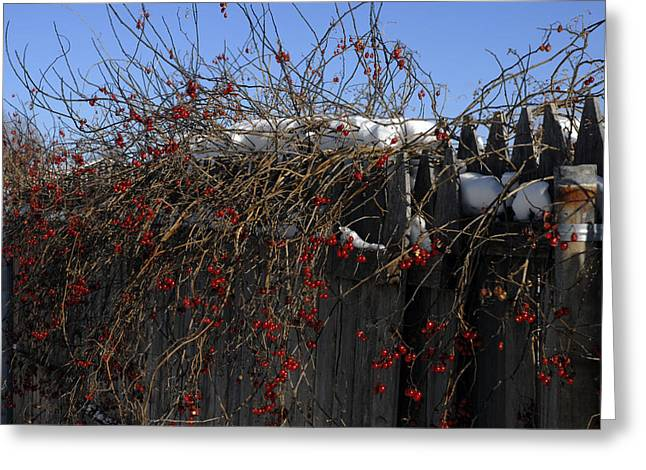 Winter Berries Greeting Card by Donna Desrosiers