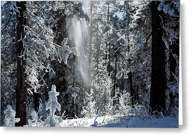 Winter Forest Greeting Card by Leland D Howard
