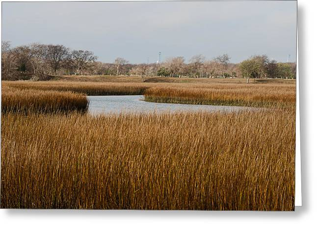 Winter Marsh Greeting Card