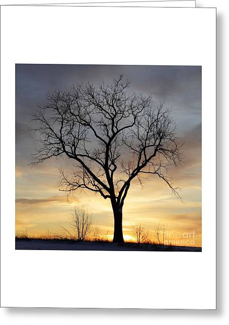 Winter Sunset Tree Greeting Card by John Stephens