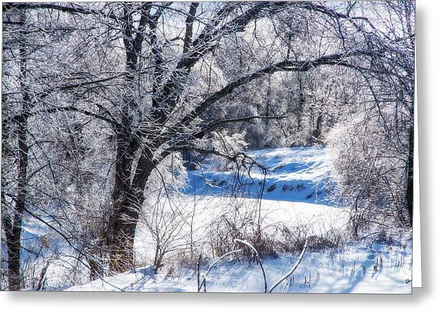 Winter Wonderland Greeting Card by Alana Ranney