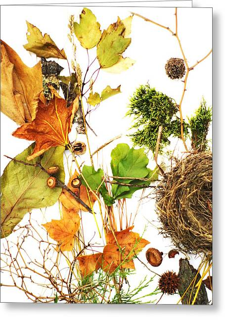 Woodsy Arrangement Greeting Card by Suzanne Powers