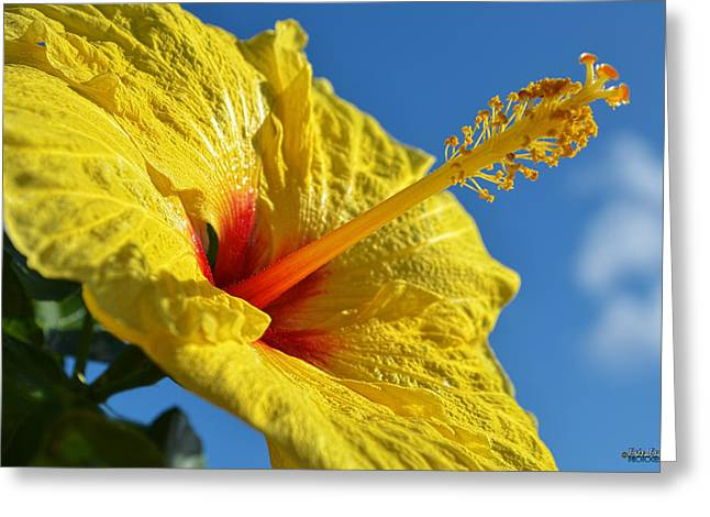 Greeting Card featuring the photograph yellow Hula Girl Hibiscus by Aloha Art