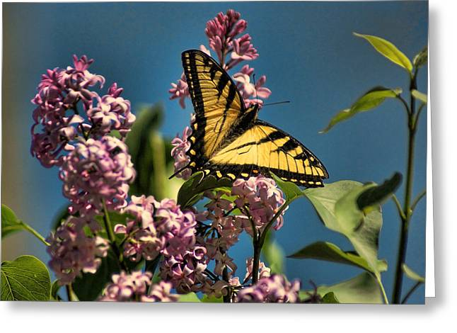 Yellow Swallowtail Greeting Card