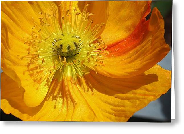 Yellow Wonder Greeting Card by Bruce Bley