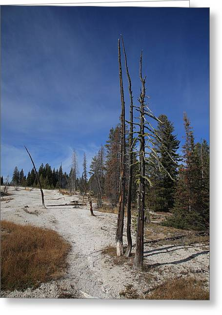Yellowstone National Park - Mountain Slope Greeting Card by Frank Romeo