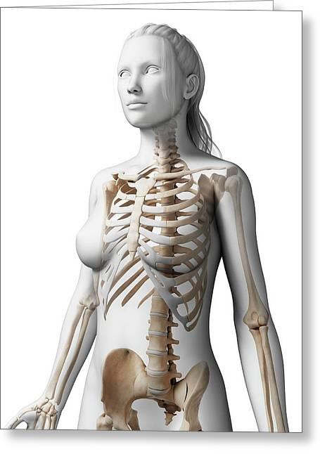 Female Skeleton Greeting Card