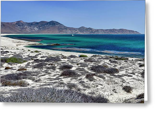 Isla De Espiritu Santo, Baja, Mexico Greeting Card by Mark Williford