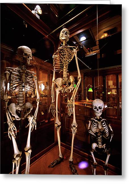 2000s Three Human Skeletons Displayed Greeting Card