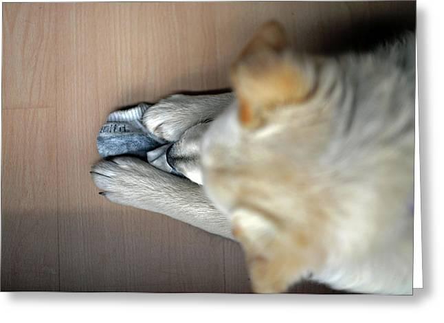 Cute Mixed Breed Puppy At Home Greeting Card by Nano Calvo