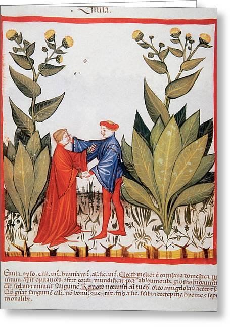 Tacuinum Sanitatis, Medieval Health Greeting Card by Prisma Archivo