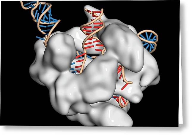 Crispr-cas9 Gene Editing Complex Greeting Card