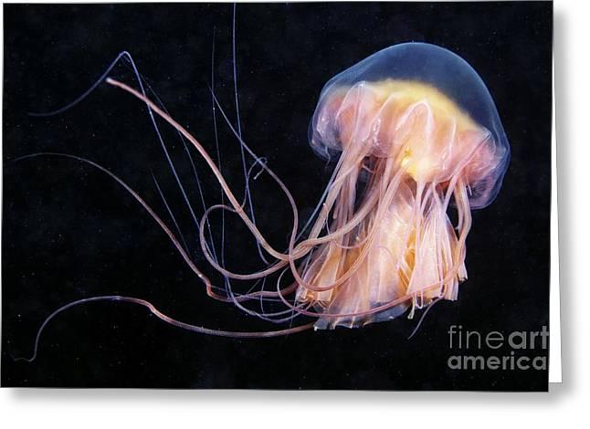 Lions Mane Jellyfish Greeting Card by Alexander Semenov