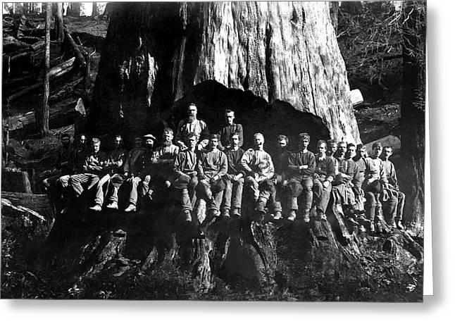 22 Loggers In Redwood Undercut -- 1884 Greeting Card by Daniel Hagerman