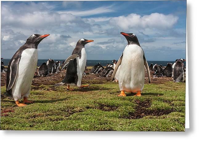 South America, Falkland Islands Greeting Card
