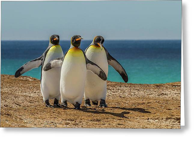 Falkland Islands, East Falkland Greeting Card by Jaynes Gallery