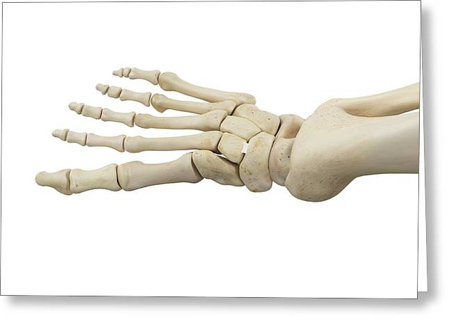 Human Foot Anatomy Greeting Card