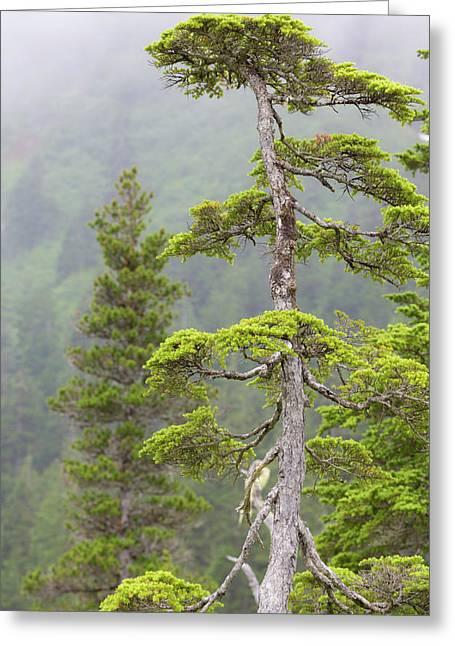 Usa, Alaska, Glacier Bay National Park Greeting Card
