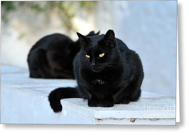 Cat In Hydra Island Greeting Card by George Atsametakis