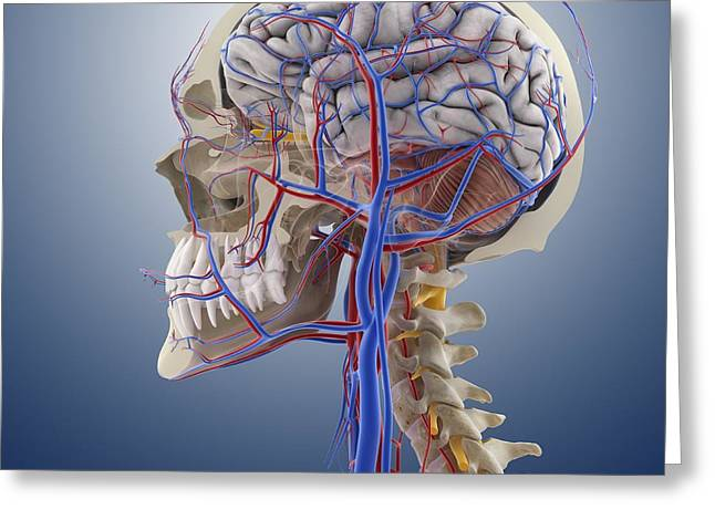 Head And Neck Anatomy, Artwork Greeting Card