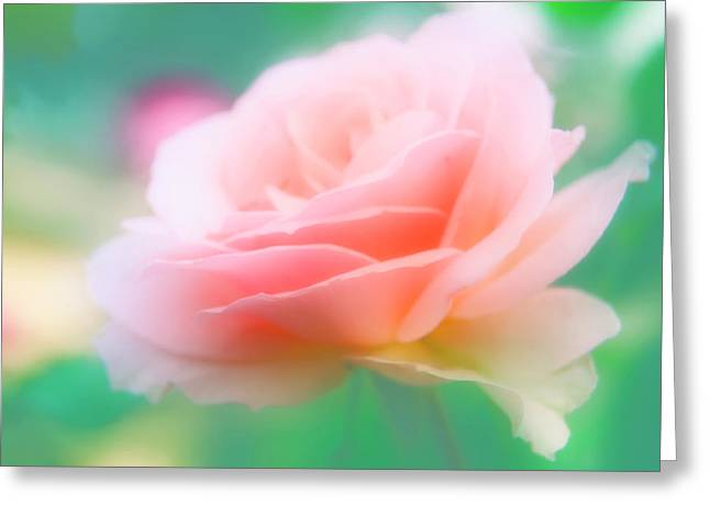 Rose (rosa Sp.) Greeting Card by Maria Mosolova/science Photo Library