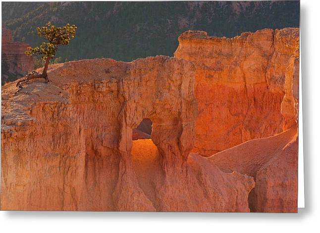 Usa, Utah, Bryce Canyon National Park Greeting Card