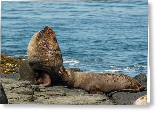 Falkland Islands, Bleaker Island Greeting Card by Jaynes Gallery