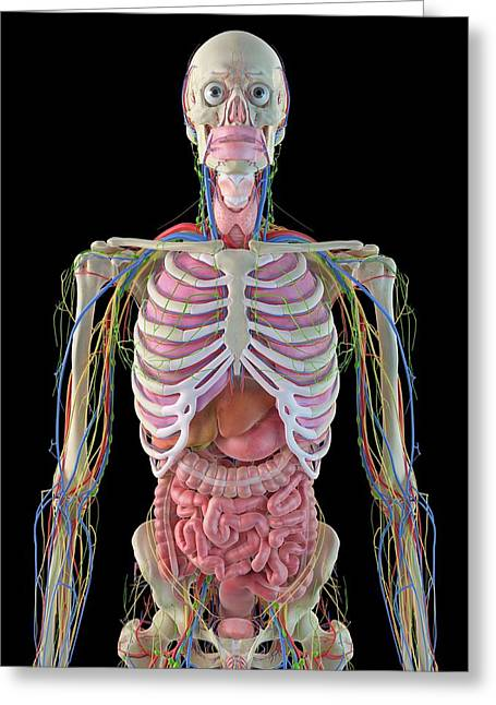 Human Internal Organs Greeting Card by Sciepro