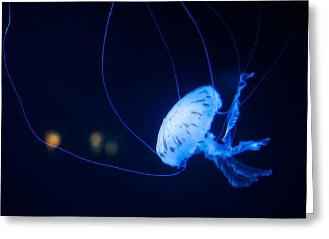 Jellyfish Greeting Card by Ulrich Schade
