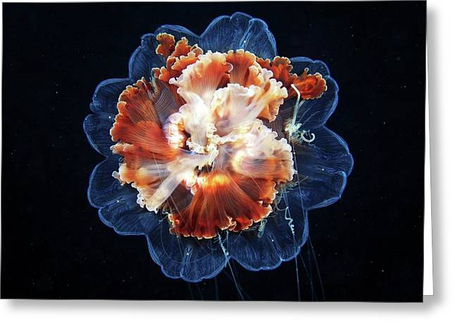 Lion's Mane Jellyfish Greeting Card