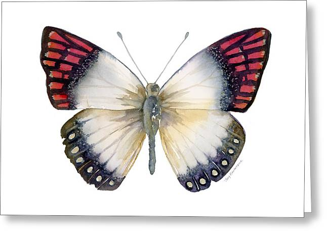 27 Magenta Tip Butterfly Greeting Card by Amy Kirkpatrick