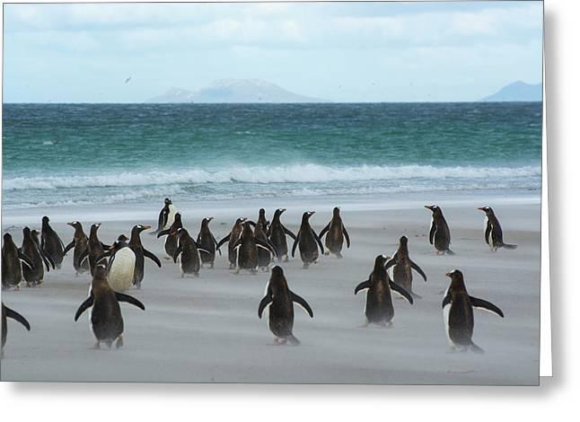 Falkland Islands Greeting Card