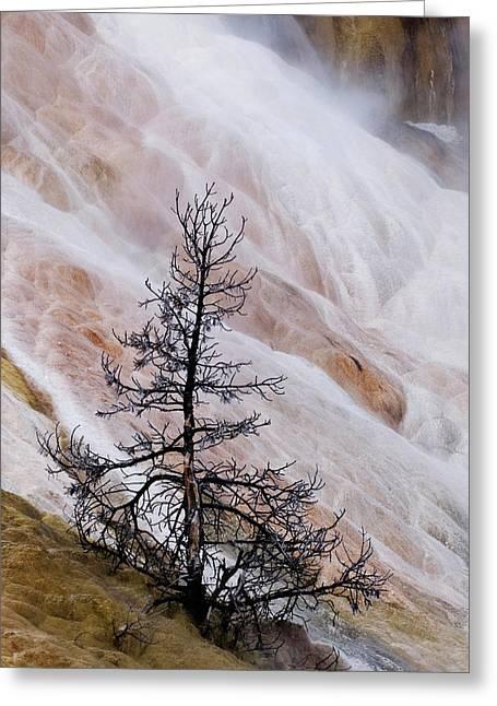 Usa, Wyoming, Yellowstone National Park Greeting Card