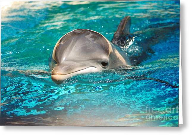 #285 Dolphin Keep Smiling Sunny Happy Photography Greeting Card by Robin Lee Mccarthy Photography